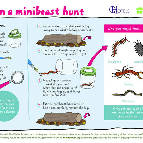 For the first time at the Feast, enter the world of the amazing mini-beasts!